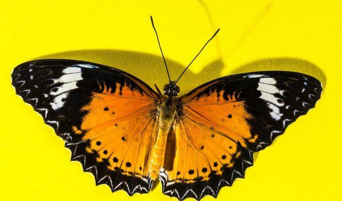 Social Marketing Butterfly